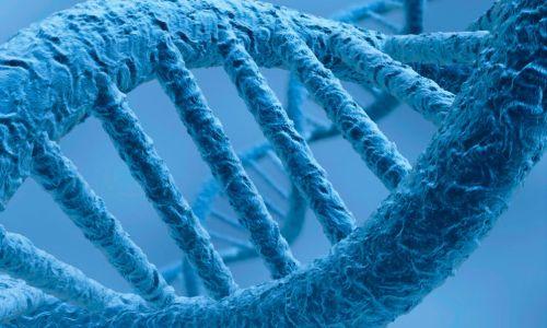 Генетики впервый раз смогли отредактировать геном зародыша человека