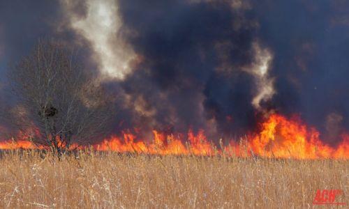 ВАмурской области бушует пожар вХинганском заповеднике