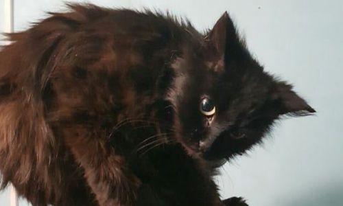Черный котенок приехал из столицы вБлаговещенск внутри запертой фуры