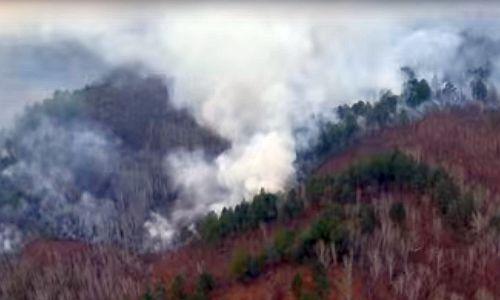 На далеком Востоке появились 5 новых лесных пожаров