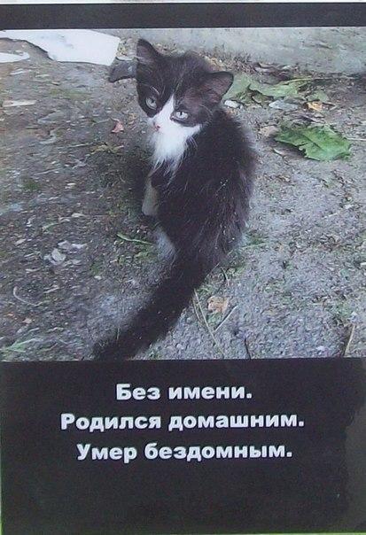 кошке не разродиться орет: