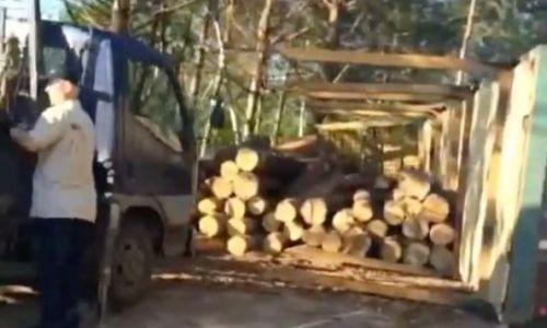 В Амурской области вырубили леса на 5 миллионов рублей